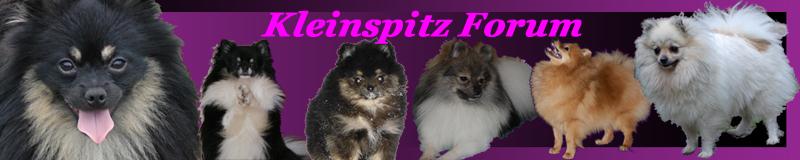 Kleinspitz Forum