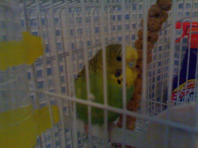 Cocotte ma belle plumes 18012011