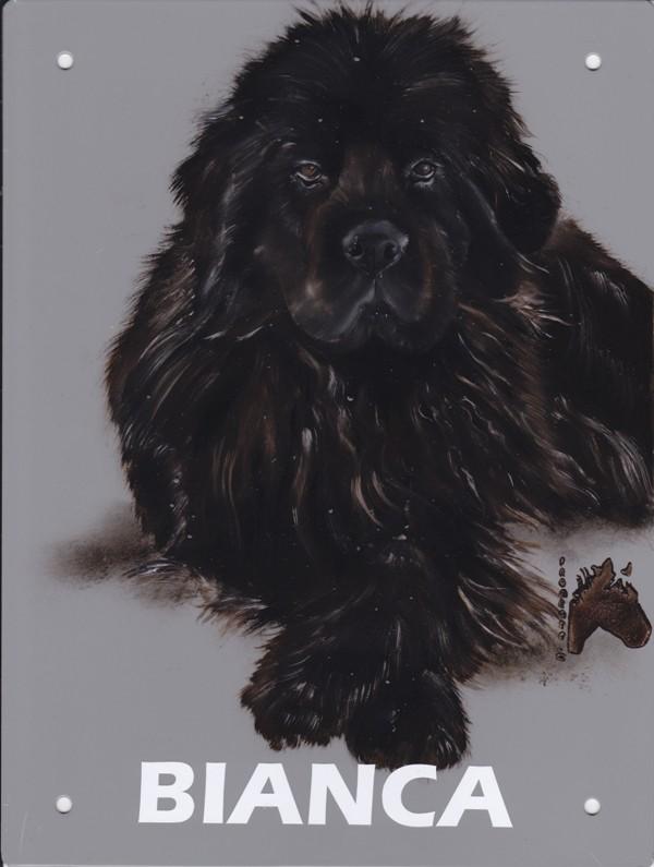Cathy peintre animalier - Page 6 Bianca10