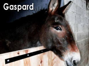 [ ACTUANIMAUX ] pour sauver les animaux - Page 2 Gaspar10