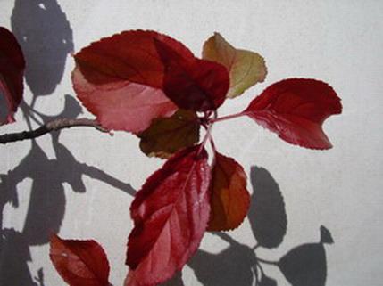 Help with Tree ID. Imgp0611