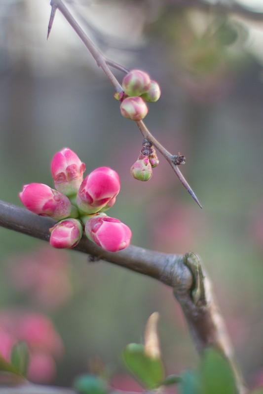 c'est le printemps ! Img_4011