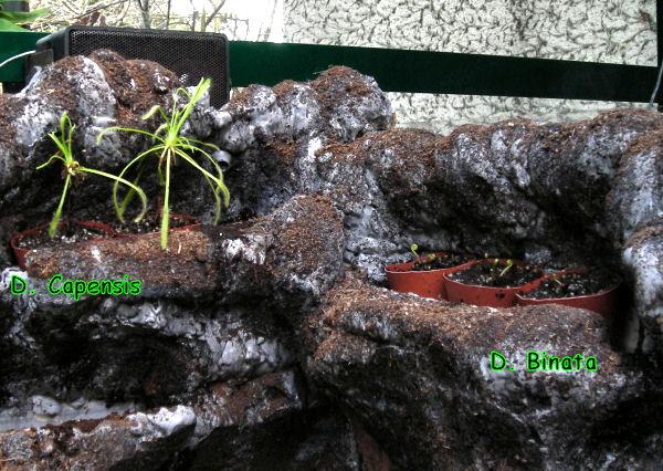 Réalisation d'un terrarium paysagé pour plantes carnivores 1ers_p10