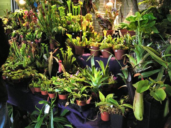 Expo Vente en région parisienne, fin mars 2010, Cergy Pontoise 95 Cergy_15