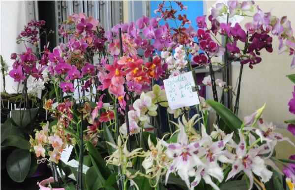 Expo Vente en région parisienne, 26 et 27 mars 2011, Cergy Pontoise 95 Orchid11
