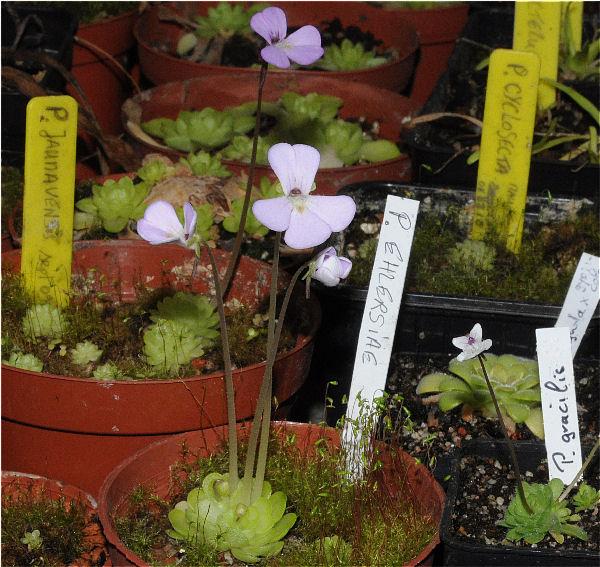 Démarrage printemps 2011 P_ehle10