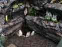 Réalisation d'un terrarium paysagé pour plantes carnivores Puits_11