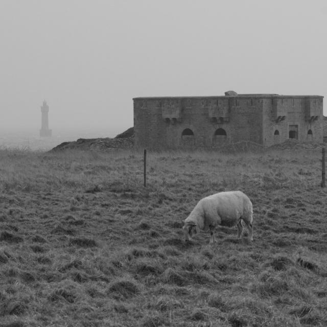 Ile de Ouessant , Bretagne P2252611