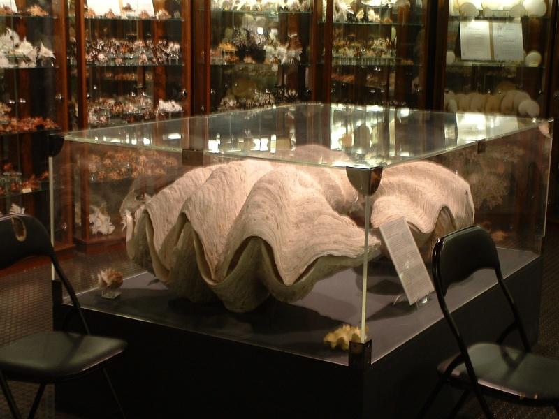 Musées de coquillages Giot2015