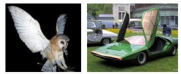 Juxtapositions oulipiennes d'images - Poésie des contrastes Chouet10