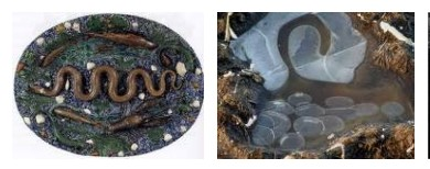 Juxtapositions oulipiennes d'images - Poésie des contrastes Formes10