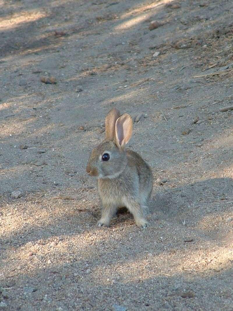 Le lapin dans l'art Marcla10