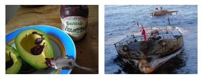 Juxtapositions oulipiennes d'images - Poésie des contrastes Mareev10