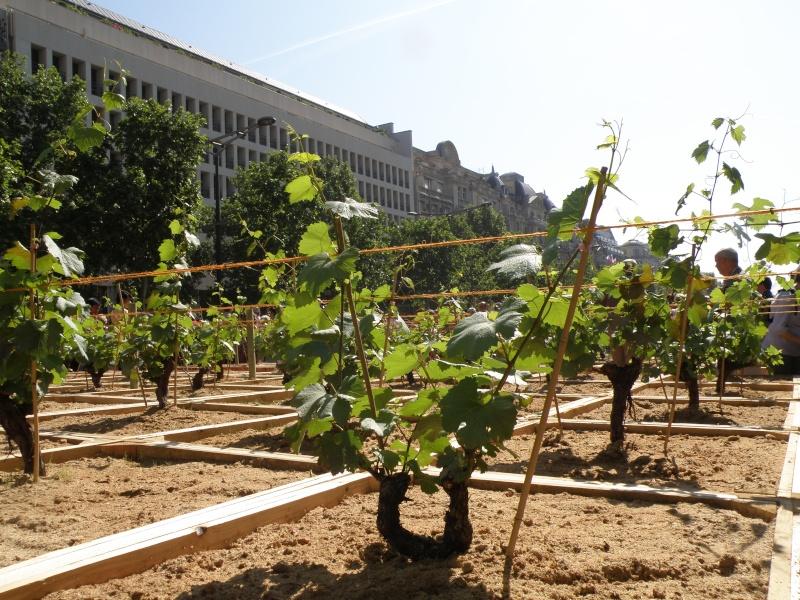 Les Champs Elysées méritent leur nom Paris_14