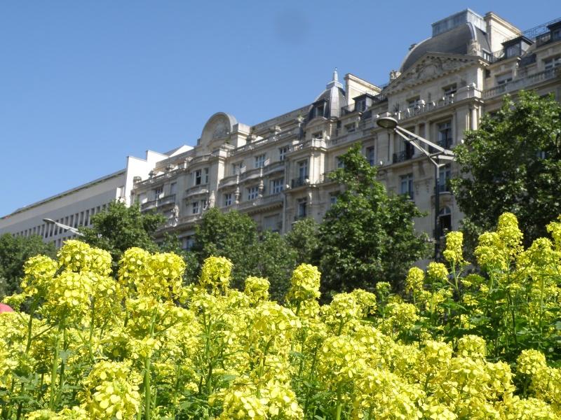 Les Champs Elysées méritent leur nom Paris_20