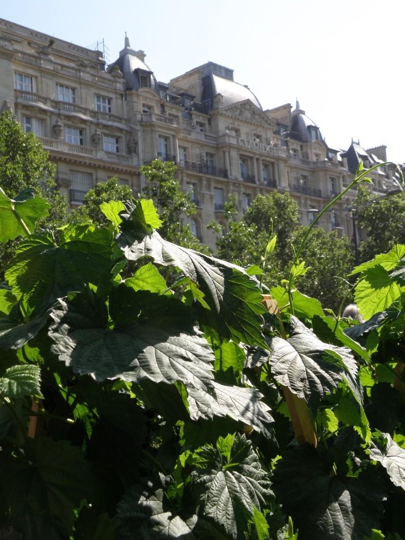 Les Champs Elysées méritent leur nom Paris_25