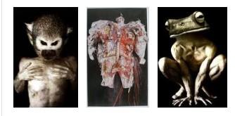 Juxtapositions oulipiennes d'images - Poésie des contrastes Tripty10