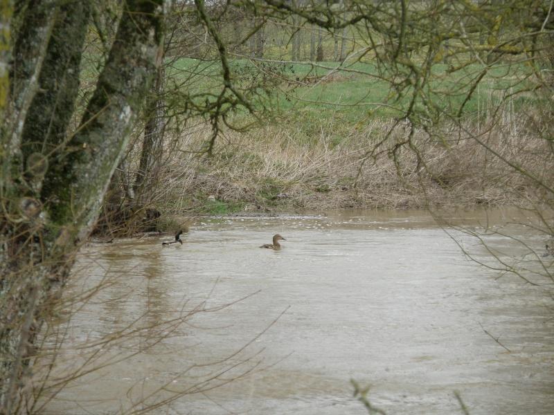 Février 2010 c'est aussi le mois des inondations!!! Vauvar31
