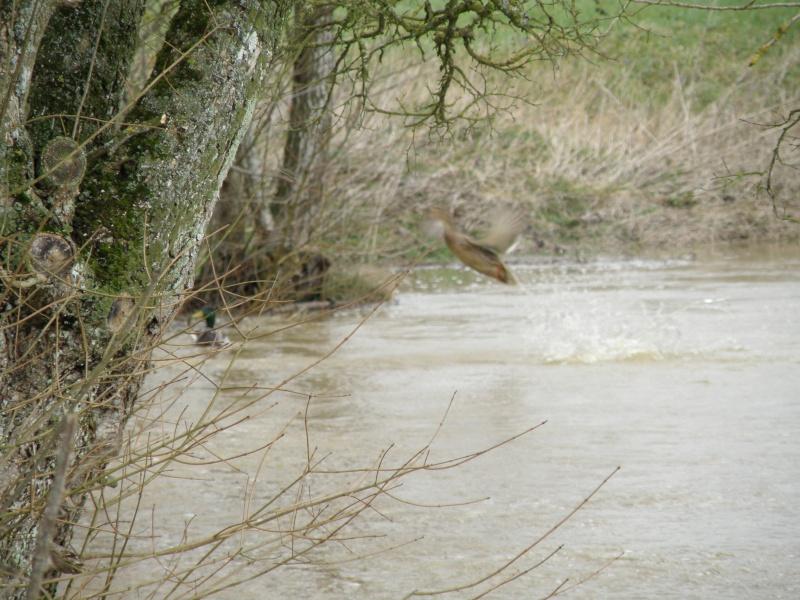 Février 2010 c'est aussi le mois des inondations!!! Vauvar32