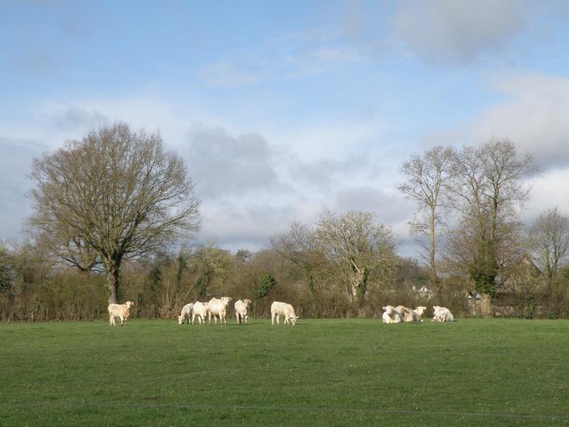 début avril 2010, Mayenne, presque un safari :-) Vauvar37