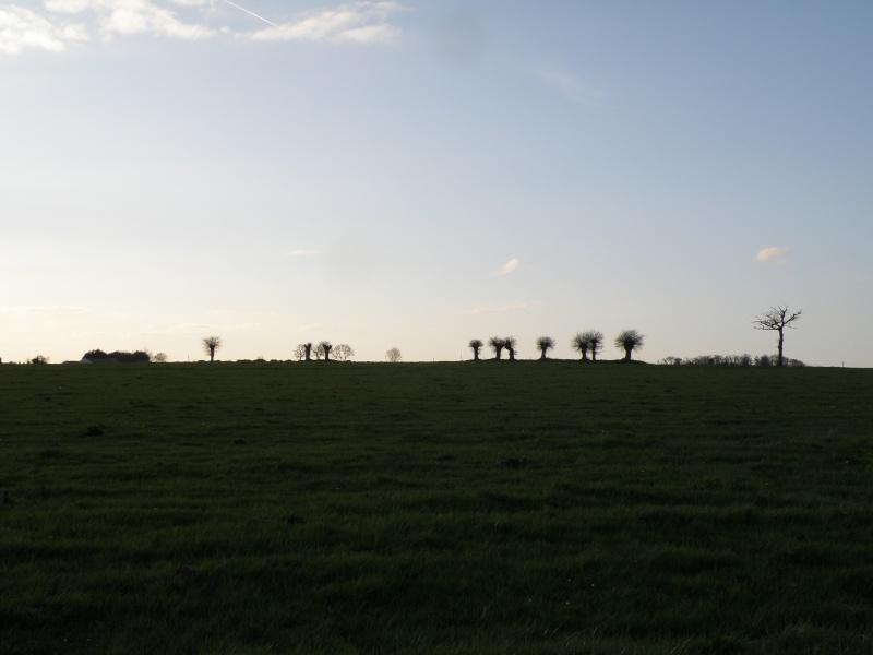 début avril 2010, Mayenne, presque un safari :-) Vauvar45
