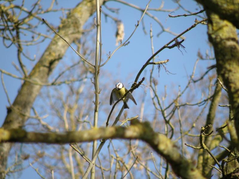 début avril 2010, Mayenne, presque un safari :-) Vauvar48