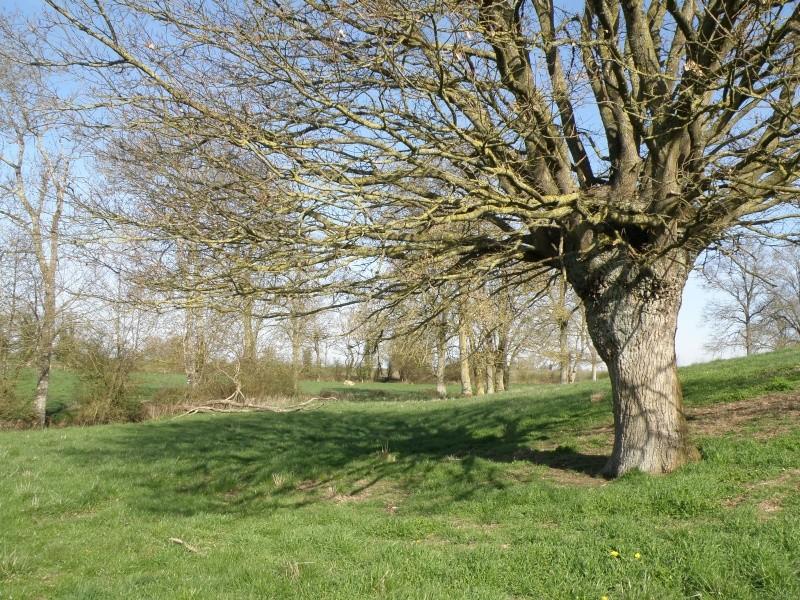 début avril 2010, Mayenne, presque un safari :-) Vauvar49