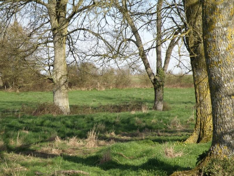 début avril 2010, Mayenne, presque un safari :-) Vauvar50