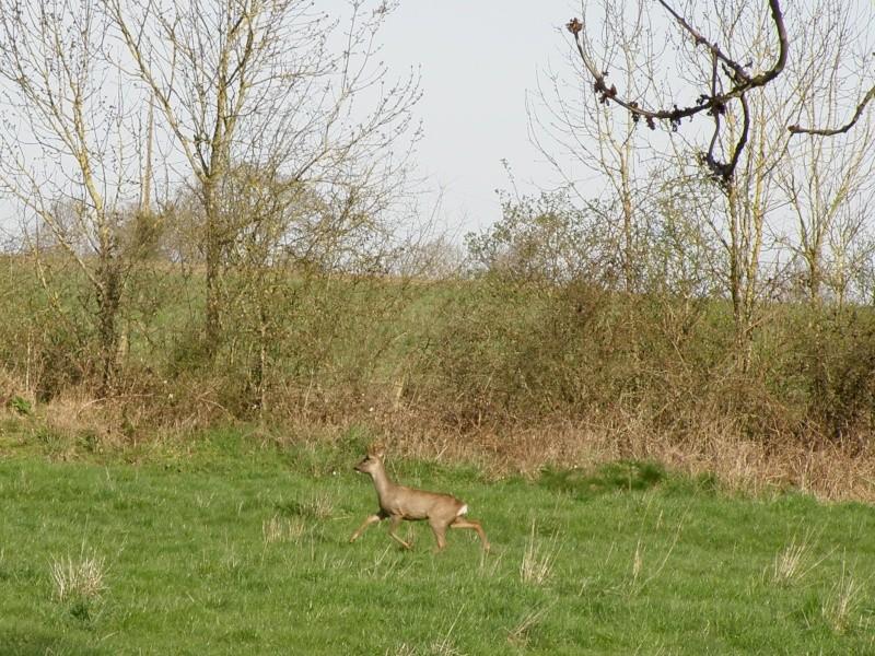 début avril 2010, Mayenne, presque un safari :-) Vauvar52