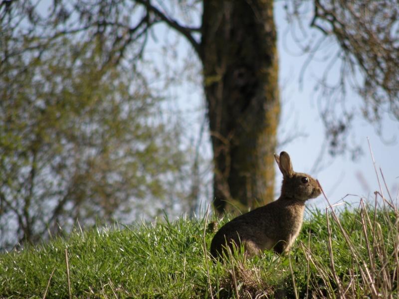 début avril 2010, Mayenne, presque un safari :-) Vauvar54