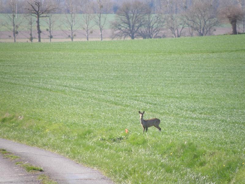 début avril 2010, Mayenne, presque un safari :-) Vauvar56