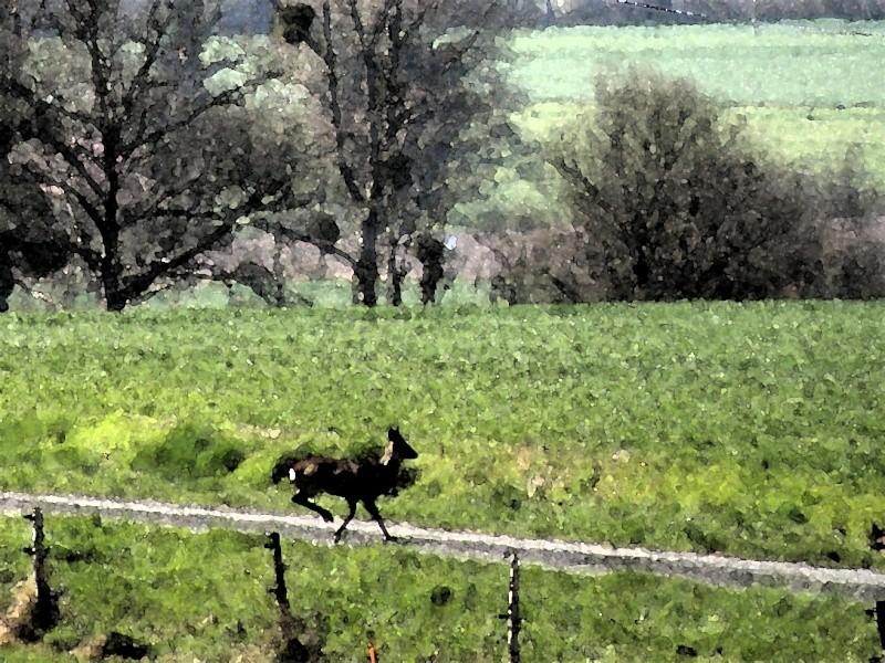 début avril 2010, Mayenne, presque un safari :-) Vauvar57