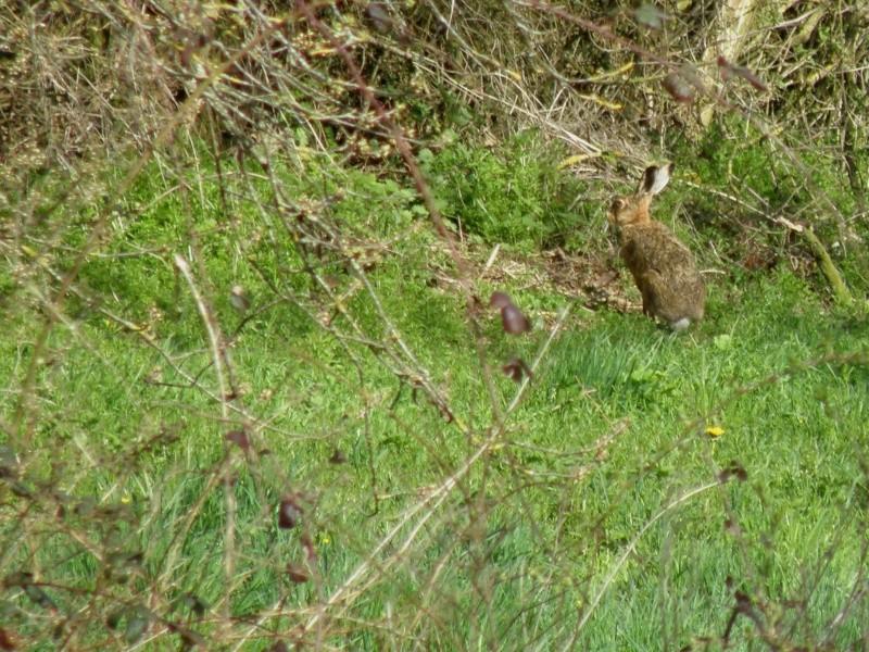 début avril 2010, Mayenne, presque un safari :-) Vauvar58