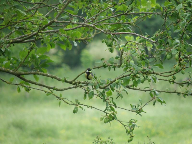 Début juin 2010 en Mayenne... lièvre cabotin et perdrix rouge Vauvar89