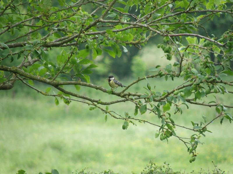 Début juin 2010 en Mayenne... lièvre cabotin et perdrix rouge Vauvar92
