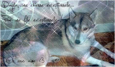 Cool un chien(PV Dayka) Creada10