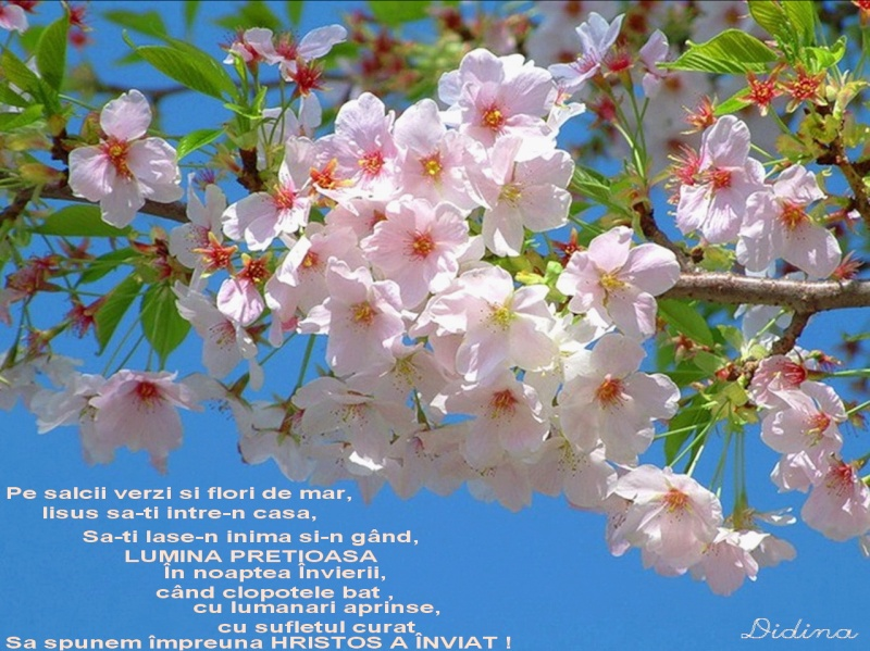 Sărbătorile Sfintelor Paşti Felici10