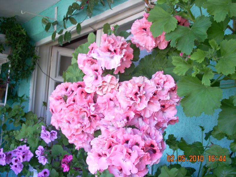 Didina Sava-Imagine Life - Pagina 2 Flori_10