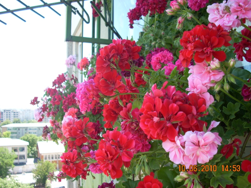 Didina Sava-Imagine Life - Pagina 2 Flori_17