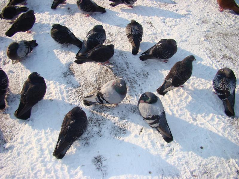 IASI-in vesminte de iarna Tradit22