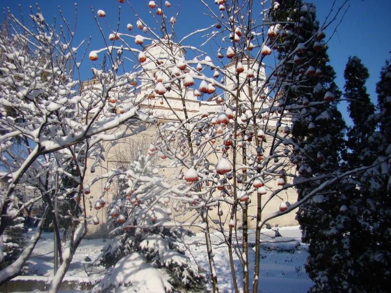 IASI-in vesminte de iarna Zapada19