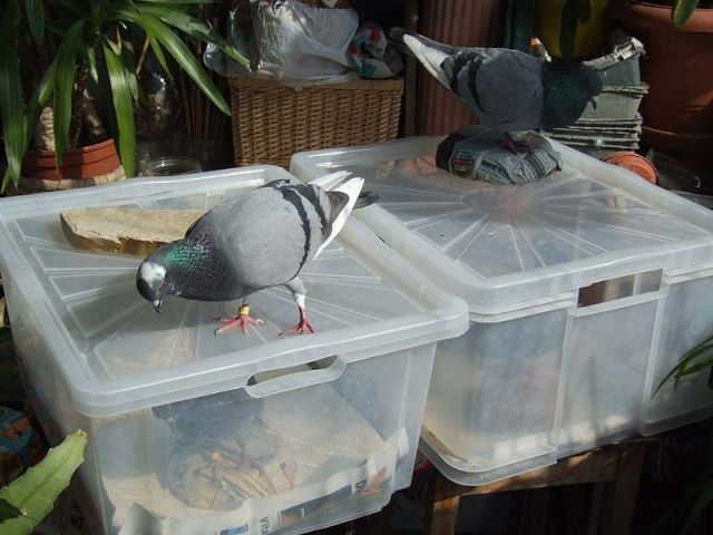 TAKING INDOOR BIRDS OUTSIDE - Page 2 0419x011