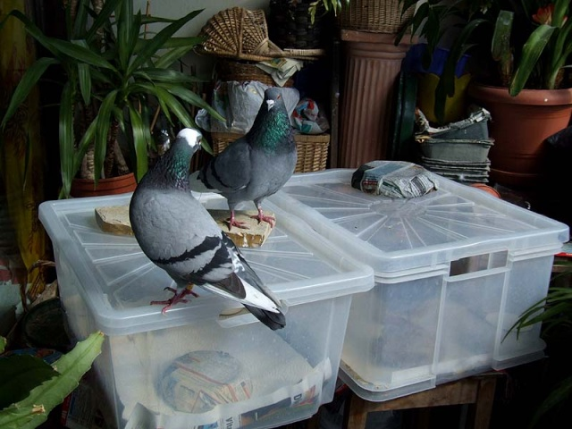 TAKING INDOOR BIRDS OUTSIDE - Page 2 0419x016