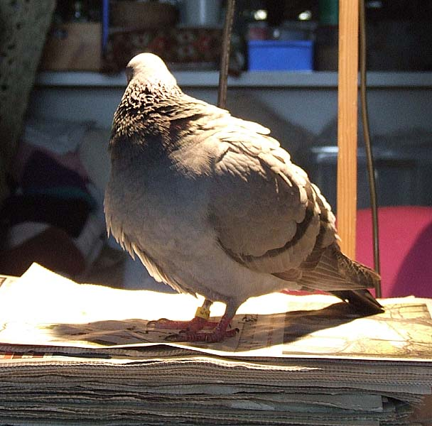 TAKING INDOOR BIRDS OUTSIDE - Page 2 0503x011