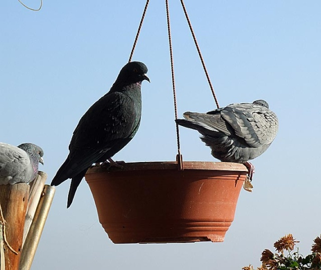 A stylish Pigeon Still Life on a late sunny Autumn Day 1026x022