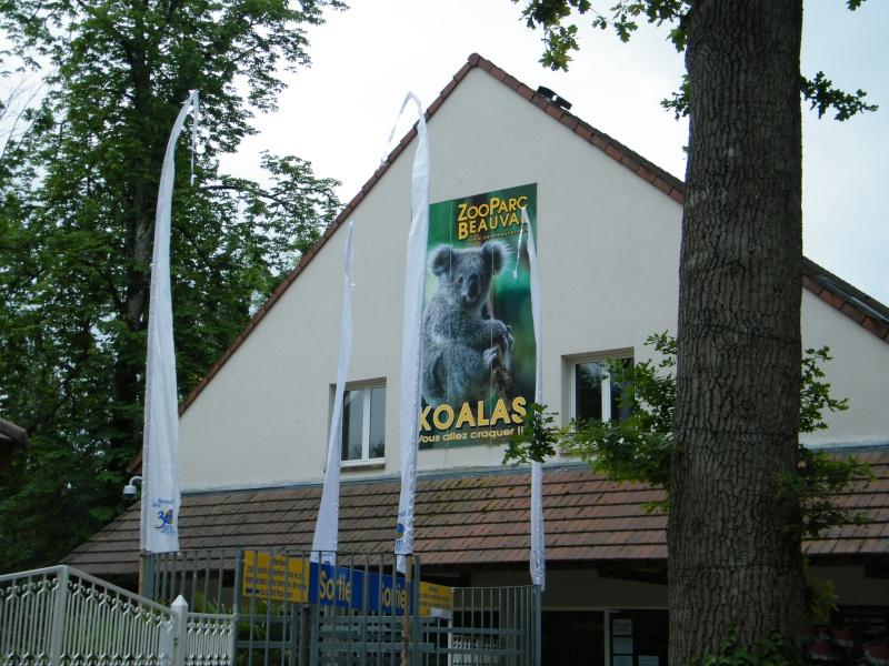 zoo de beauval Dscf0524