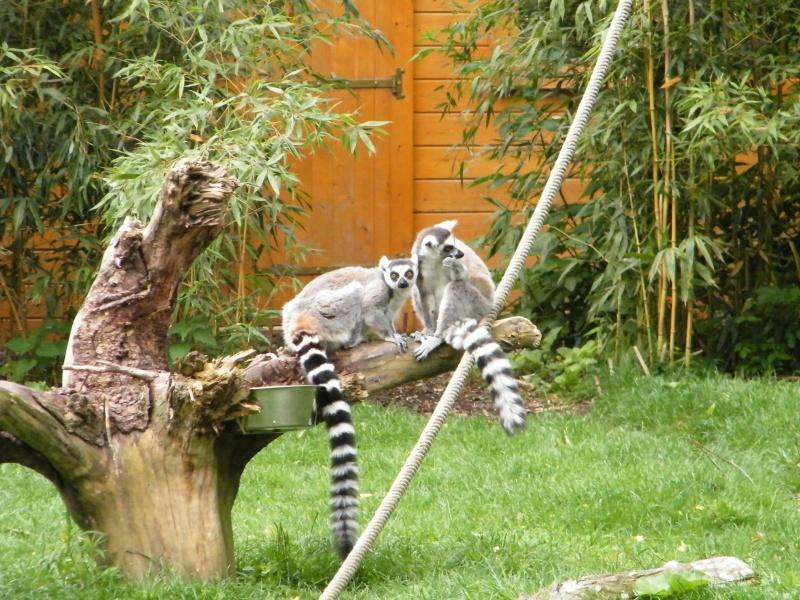 zoo de beauval - Page 2 Dscf0525
