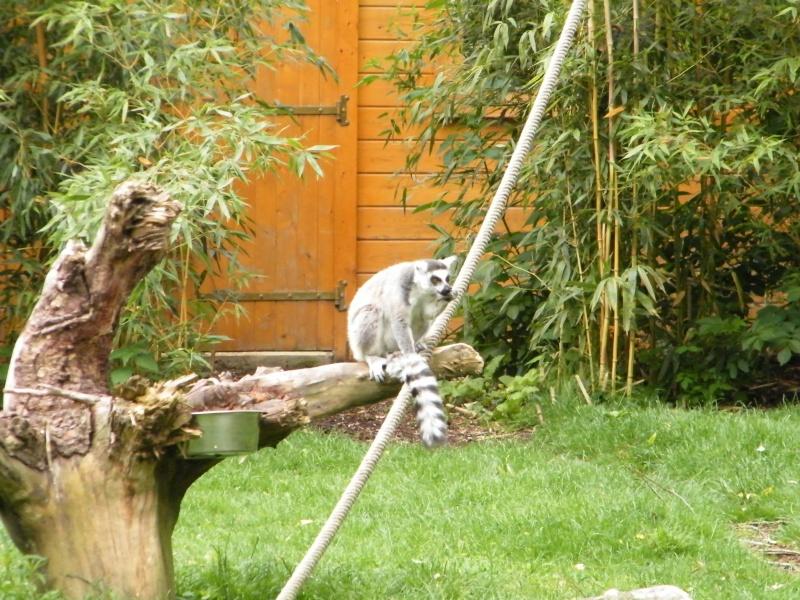 zoo de beauval - Page 2 Dscf0526