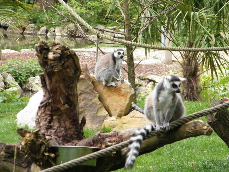 zoo de beauval - Page 2 Dscf0527