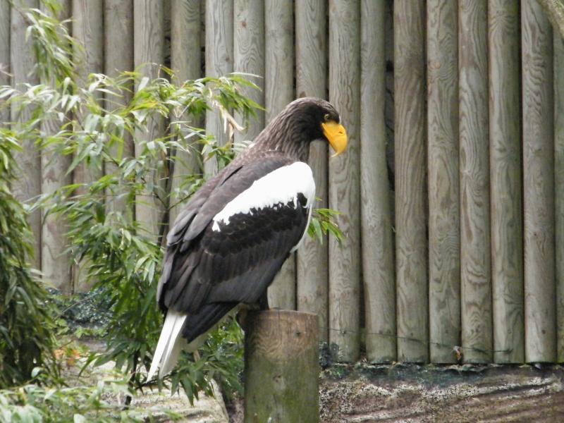 zoo de beauval Dscf0612